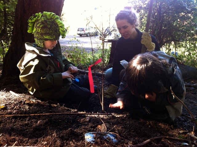 planting a forest