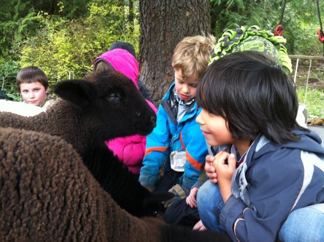 meeting the lambs
