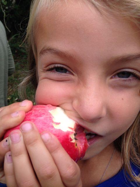india apple.jpg