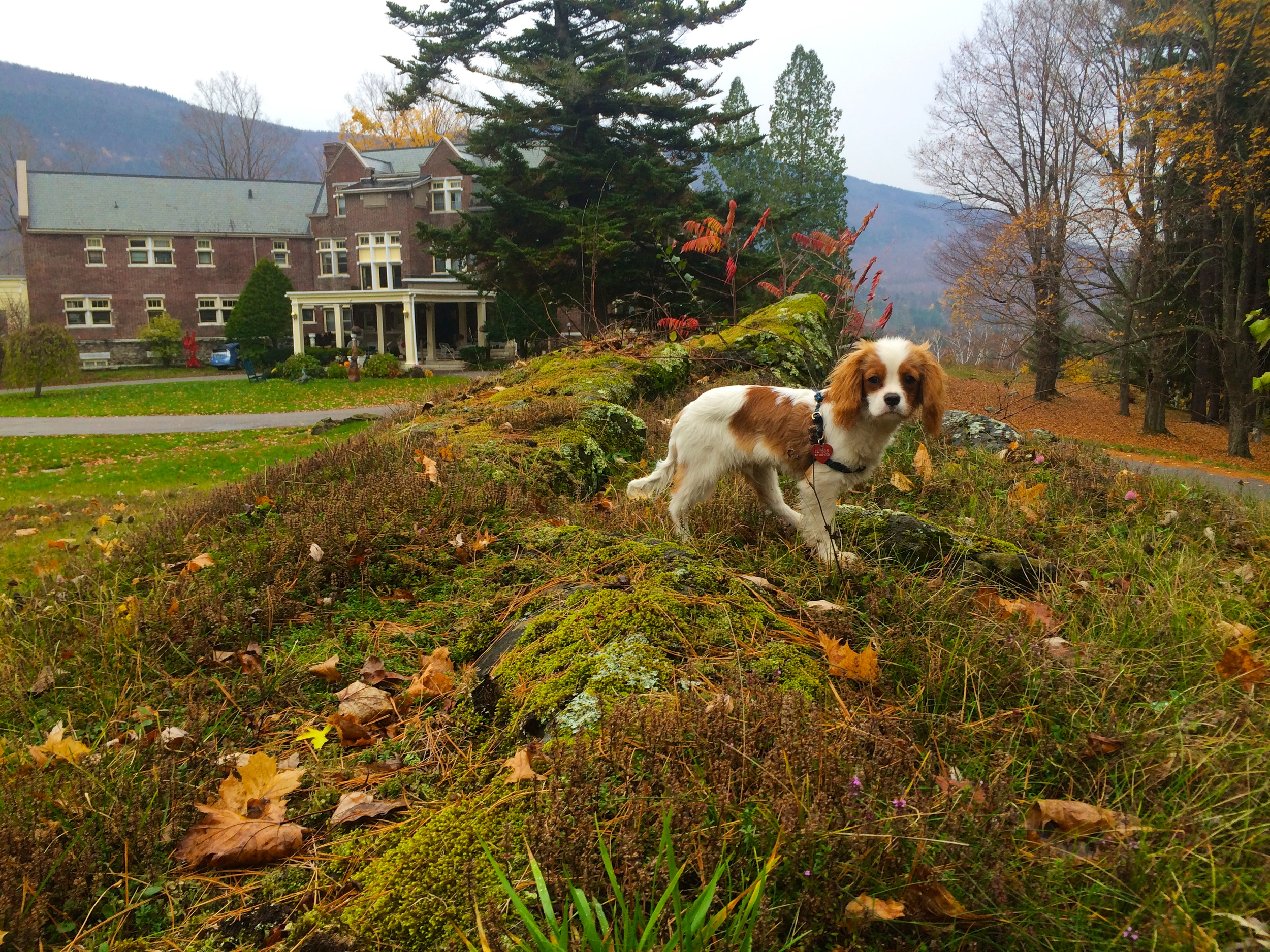 Jetson at the Wilburton in Fall