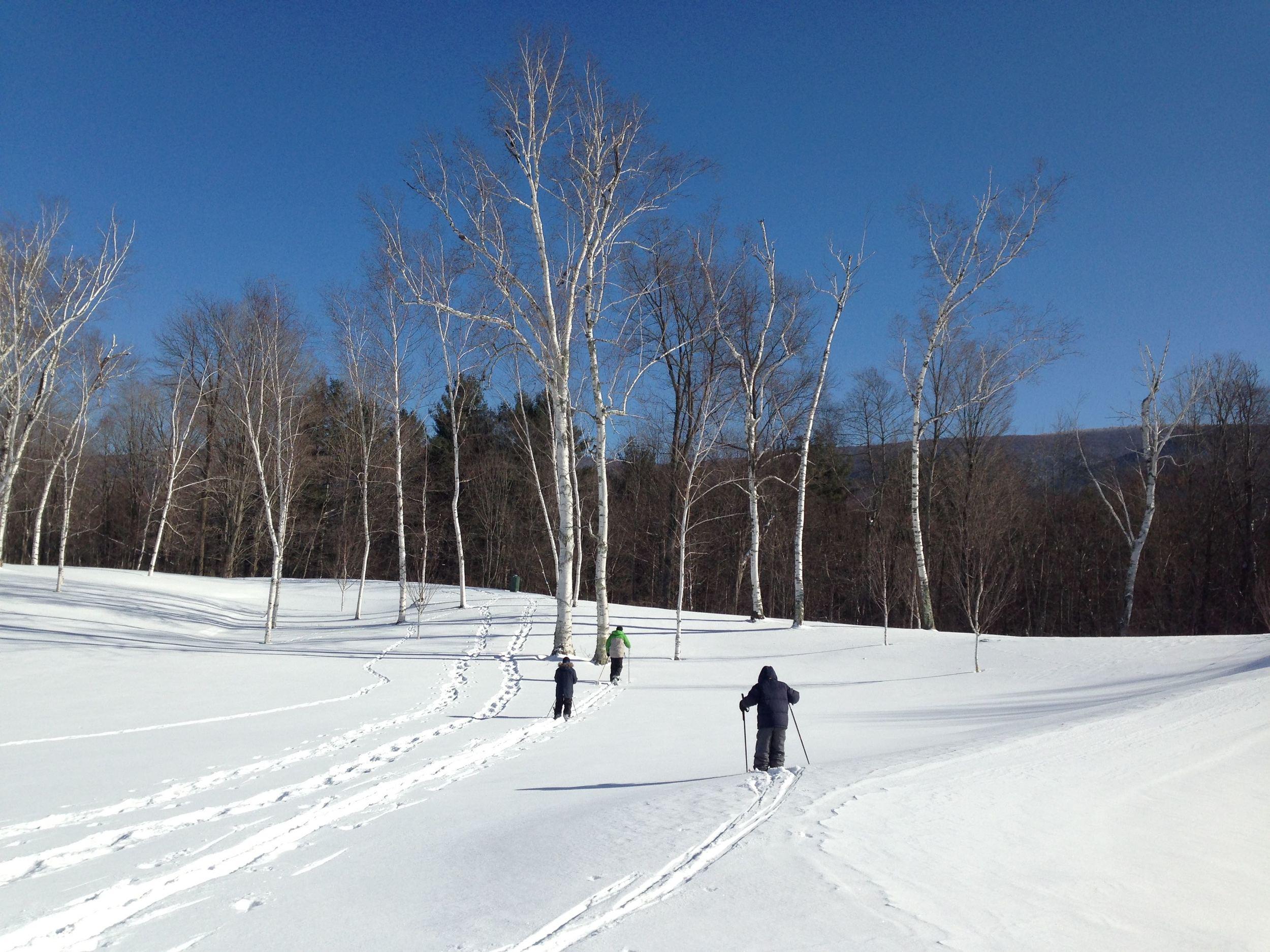Cross Country Ski on our estate LR.jpg