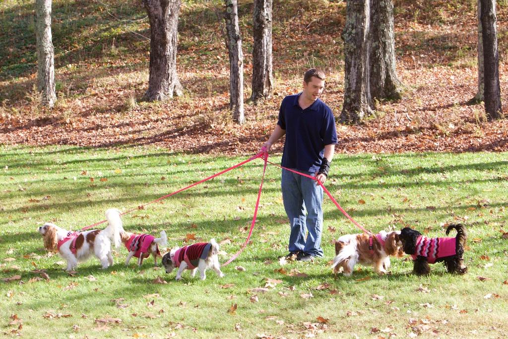 walking 6 dogs Cavalier Wilburton Inn Howloween 2016.jpg