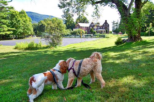 wilburton-inn-manchester-vermont-dogs