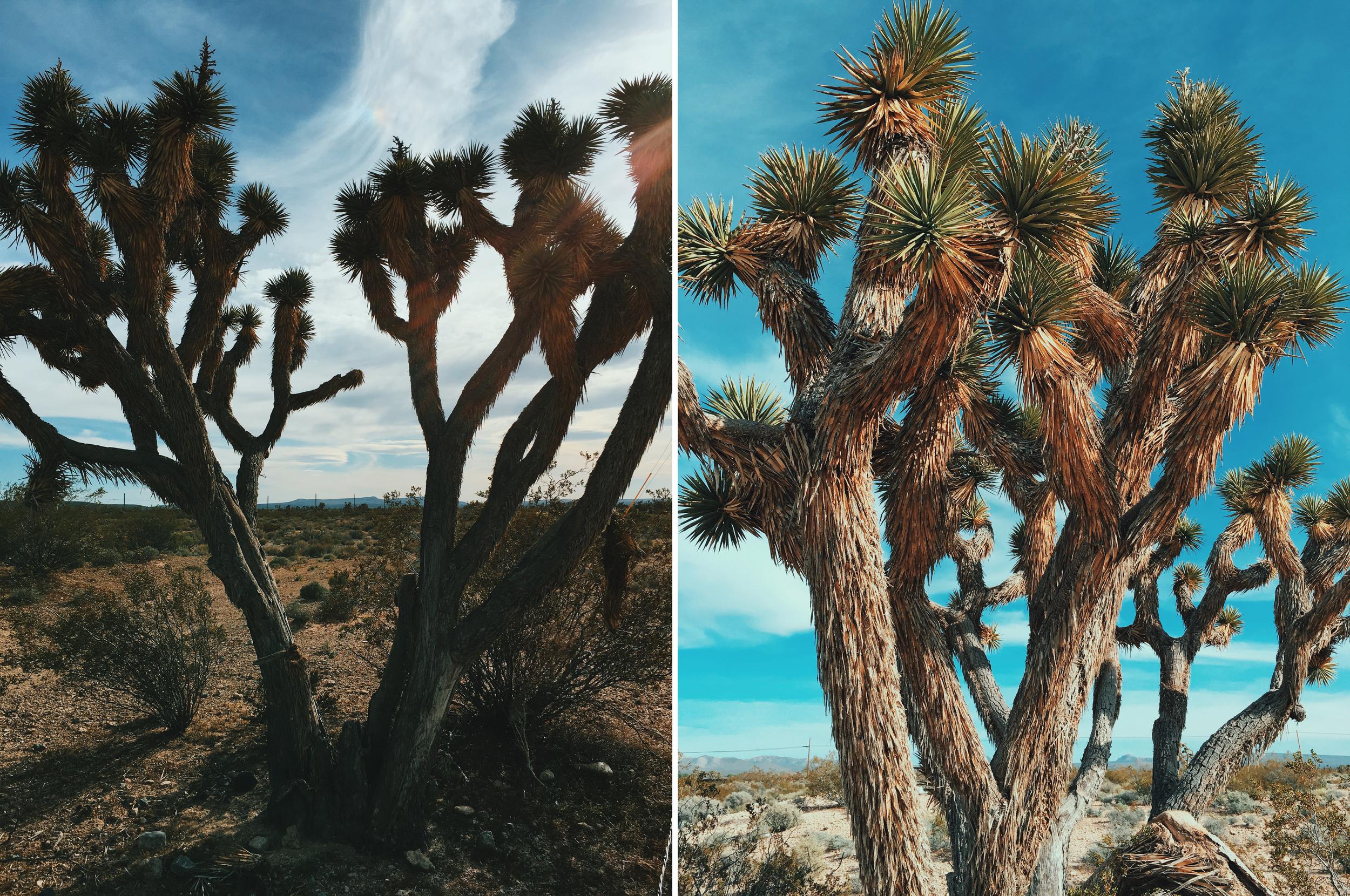 merged trees.jpg