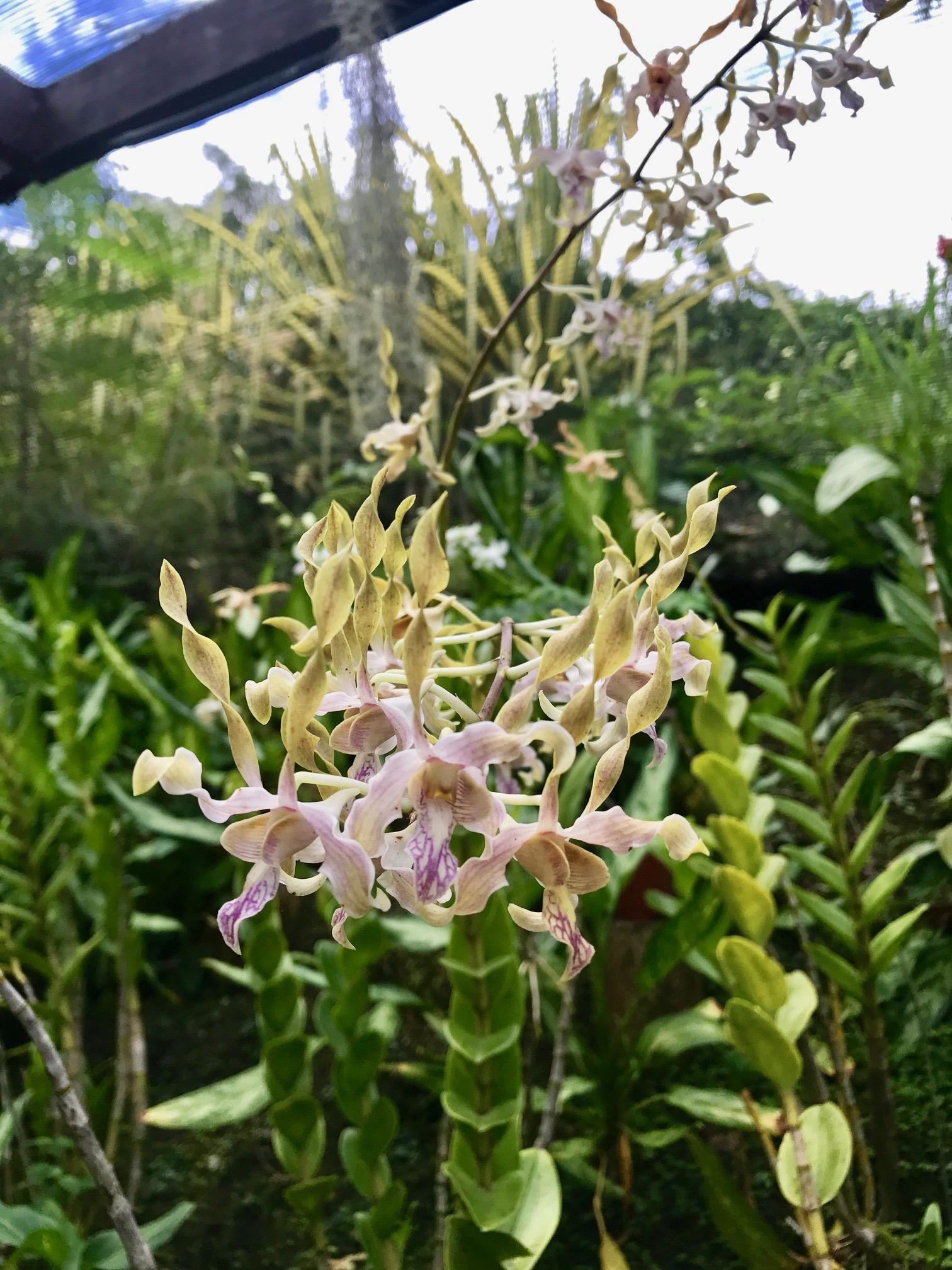 Alien looking orchids.