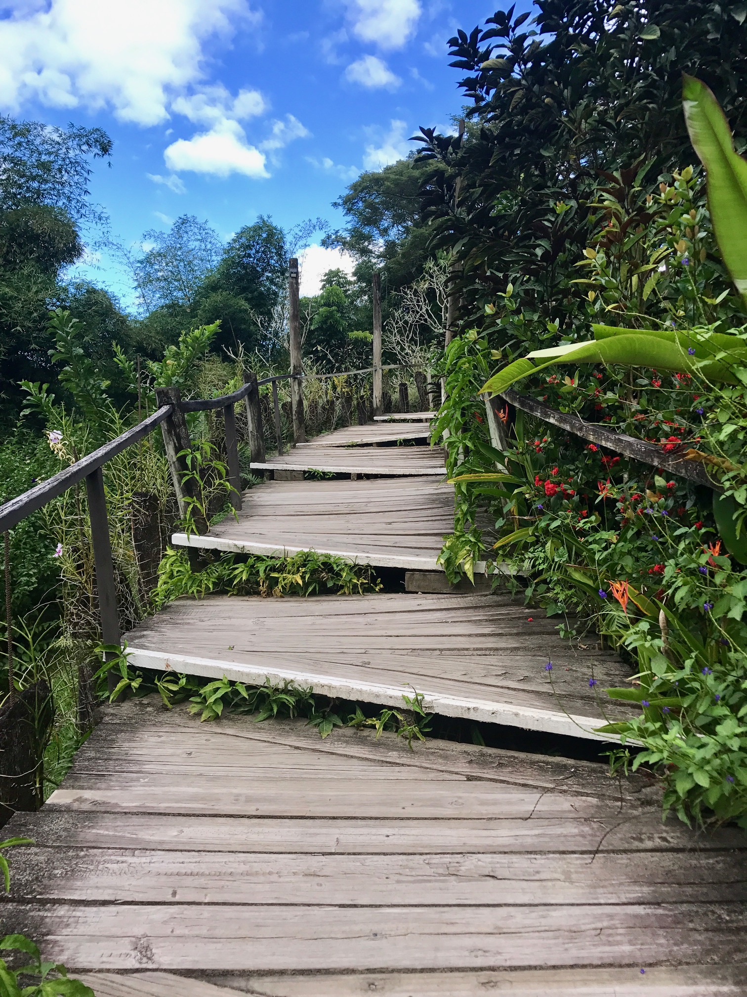 Stairway that leads to endless possibilities...  Final thought: If you find a path that tugs at your heart, tickles your brain, or peaks your interest, take it. You may not know where it will lead, but the process of getting there, may change your life. :)
