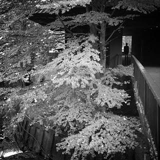 Bourou Noguchi-1.jpg