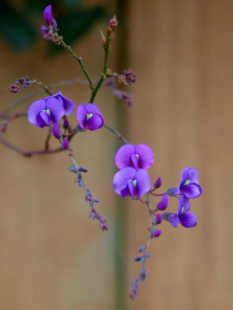 Autumn Orchid