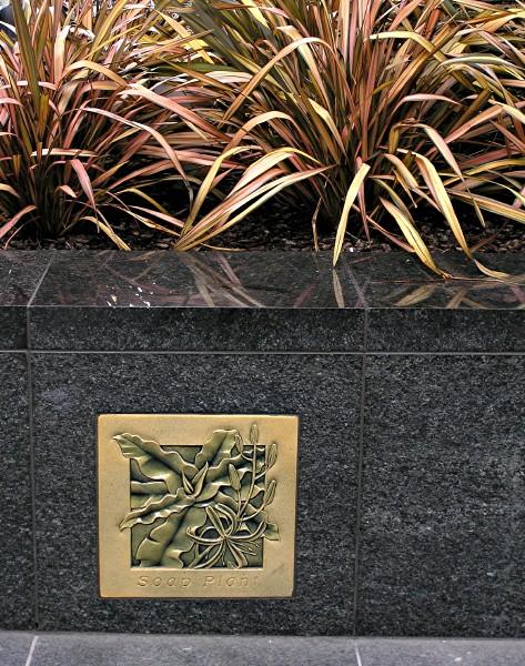 Soap Plant.jpg