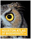 atlas icon.jpg