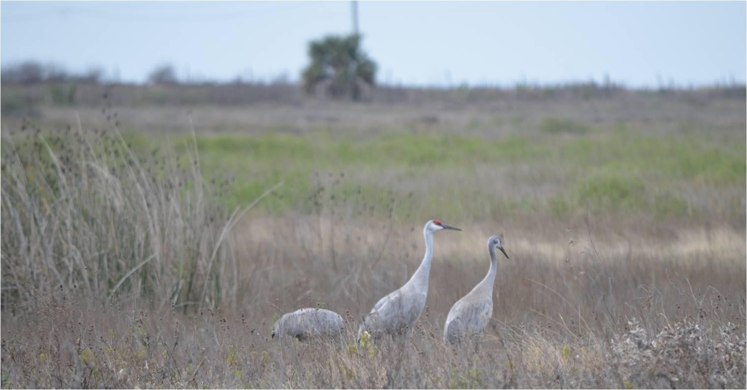 Prairies of the Greater Houston Region