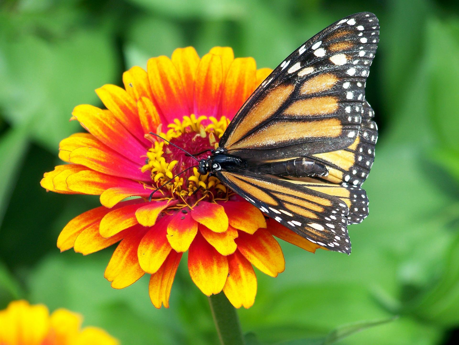 monarch-18140_1920.jpg