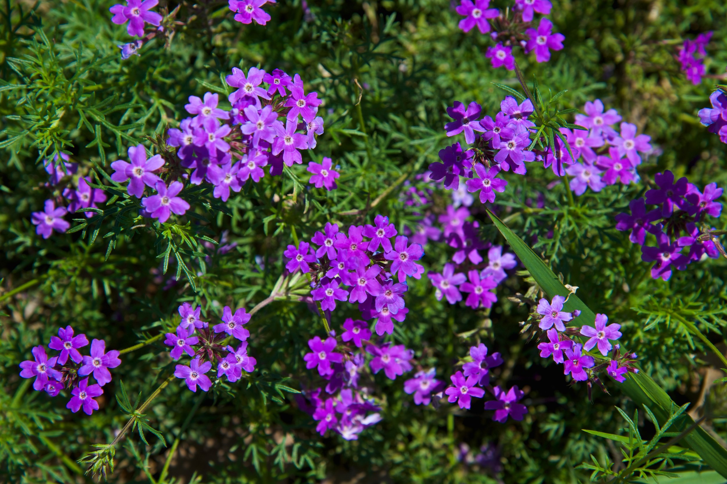 Lake Houston Wildflowers.jpg