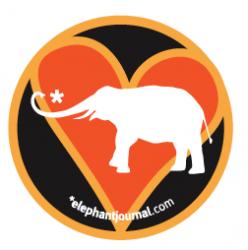 elephant-journal.jpg