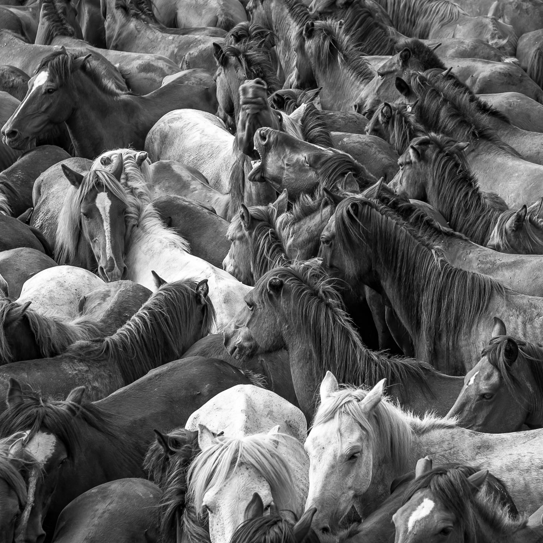Horses-6.jpg