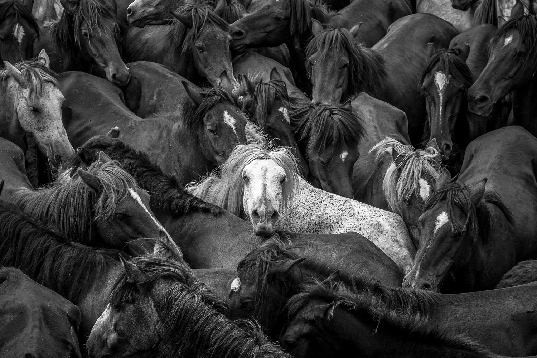 Horses-12.jpg