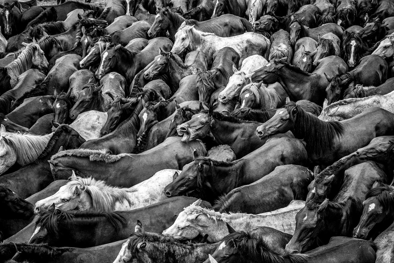 Horses-18.jpg
