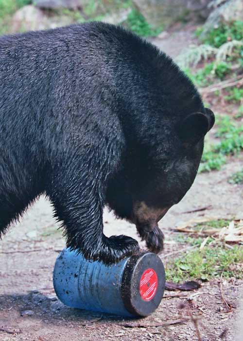 You should not be standing there taking pictures if a bear is working on your canister. Do you hear me? Back away, slowly…