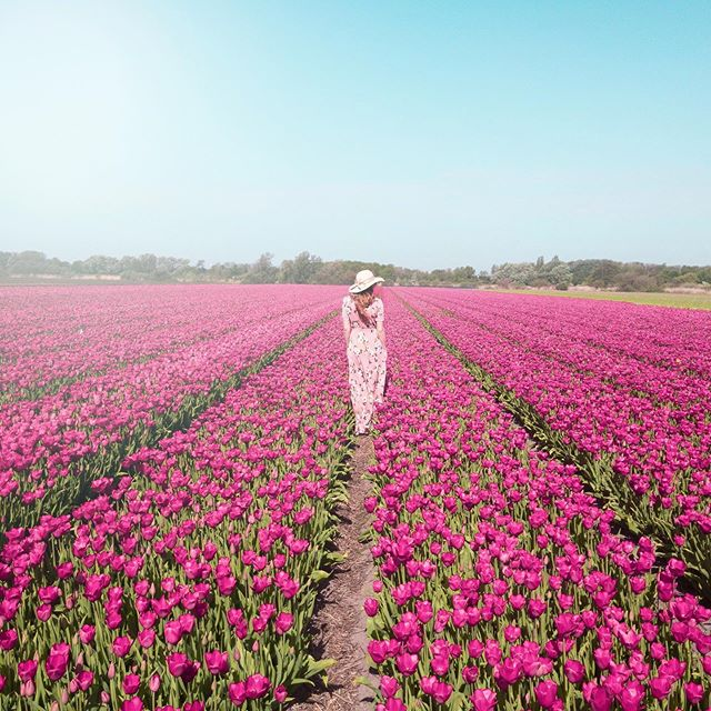 """Look closely at the present you are constructing. It should look like the future you are dreaming.""☾ᴬˡᶦᶜᵉ ᵂᵃˡᵏᵉʳ ⠀⠀⠀⠀⠀⠀⠀⠀⠀ I was so happy to make this vision I had into a reality this week! Seeing all the beautiful flowers fields and gardens around South Holland was an amazing experience. While most of this trip I've relied on the dependable and efficient public transport of the Netherlands, this field was only reachable by car or bike. ⠀⠀⠀⠀⠀⠀⠀⠀⠀ Luckily Mike's cousin Julien, who graciously played tour guide & host for me during my 3 day stay in Leiden, knew of this specific field where he thought I'd be able to take pictures (because a lot of them are blocked off) and …voilà! Definitely the experience I had been hoping for. 🌷🇳🇱💕👍🏻 ⠀⠀⠀⠀⠀⠀⠀⠀⠀ What's your latest dream turned reality situation? • • • • • • • • #flowers #tulips #garden #holland #tulipfields #netherlands #iamatraveler #dutch #dutchtravel #dametraveler #prettylittleiiinspo #visitamsterdam #femmetravel #Iamsterdam #girlsborntotravel #girlaroundtheworld #girlsabroad #travelgirlsgo #thetravelwomen #ladiesgoneglobal #girldiscoverers #pinktrotters #sheisnotlost #traveladdict #discoverunder5k #solotravel #fashion #girlytravel"