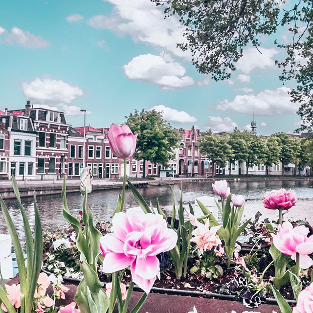 Find  𝒷𝑒𝒶𝓊𝓉𝓎 in the small things. 🌷🌼🌹🌸🌻 ⠀⠀⠀⠀⠀⠀⠀⠀⠀ One thing there is no shortage of in the Netherlands in the spring are fresh FLOWERS everywhere! From the famed tulip fields, to the beautiful Keukenhof Garden, to the loveliest details like these flower boxes decorating the bridges of the town of Gouda. ⠀⠀⠀⠀⠀⠀⠀⠀⠀ They were even handing out free bouquets of tulips at the train station in Amsterdam which I used to decorate my hotel room! Which reminds me - when I go home I'm definitely excited to start planting in my garden. (Also these Ireland temps have been freeeezing so I'm looking forward to some summer appropriate weather 😂) ⠀⠀⠀⠀⠀⠀⠀⠀⠀ Do you enjoy planting and gardening? • • • • • • • • #solotravel #solofemaletravel #architecture #tlpicks #holland #netherlands #iamatraveler #girlsthatsparkle #dutch #dutchtravel #dutchhouses #canalhouse #dametraveler #prettylittleiiinspo #visitamsterdam #femmetravel #Iamsterdam #girlsborntotravel #girlaroundtheworld #girlsabroad #travelgirlsgo #thetravelwomen #ladiesgoneglobal #girldiscoverers #pinktrotters #sheisnotlost #traveladdict #discoverunder5k #openmyworld #girlytravel