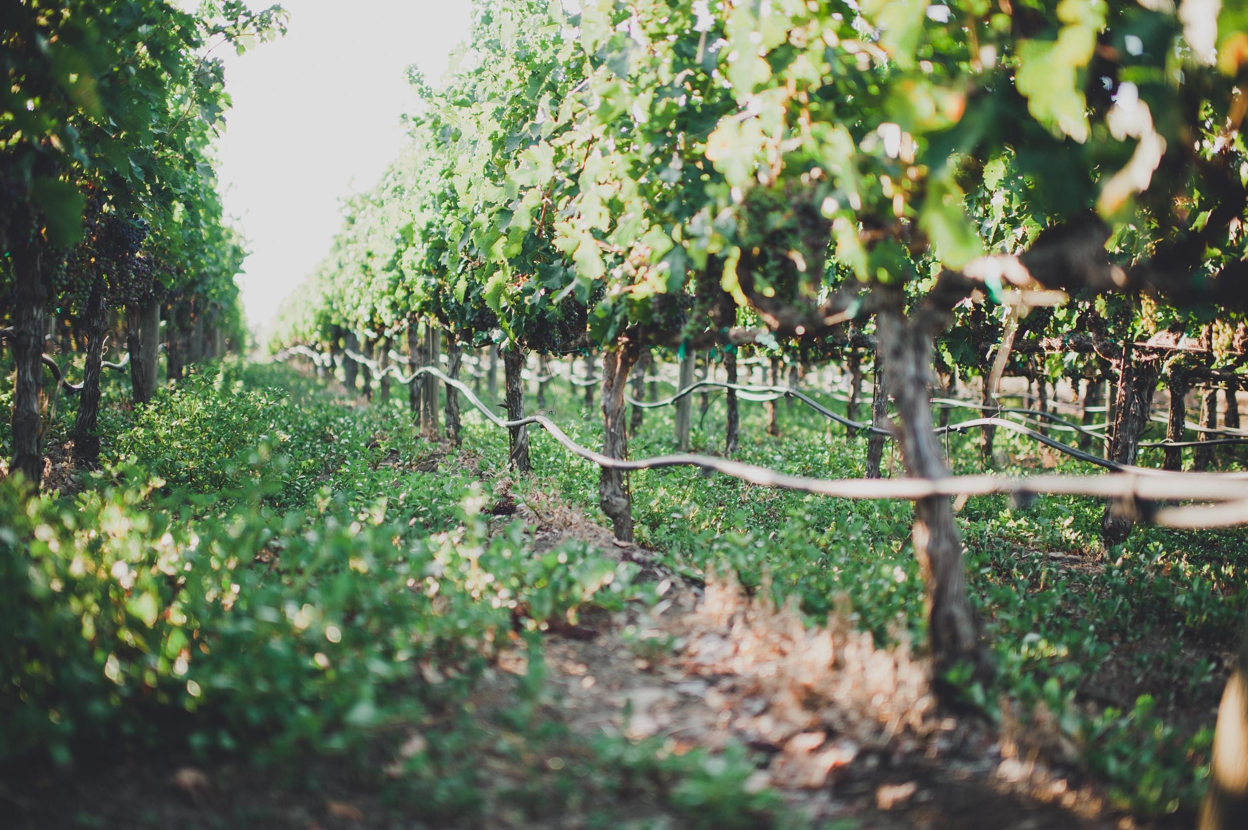 Madrigal Vineyards-225_2.jpg