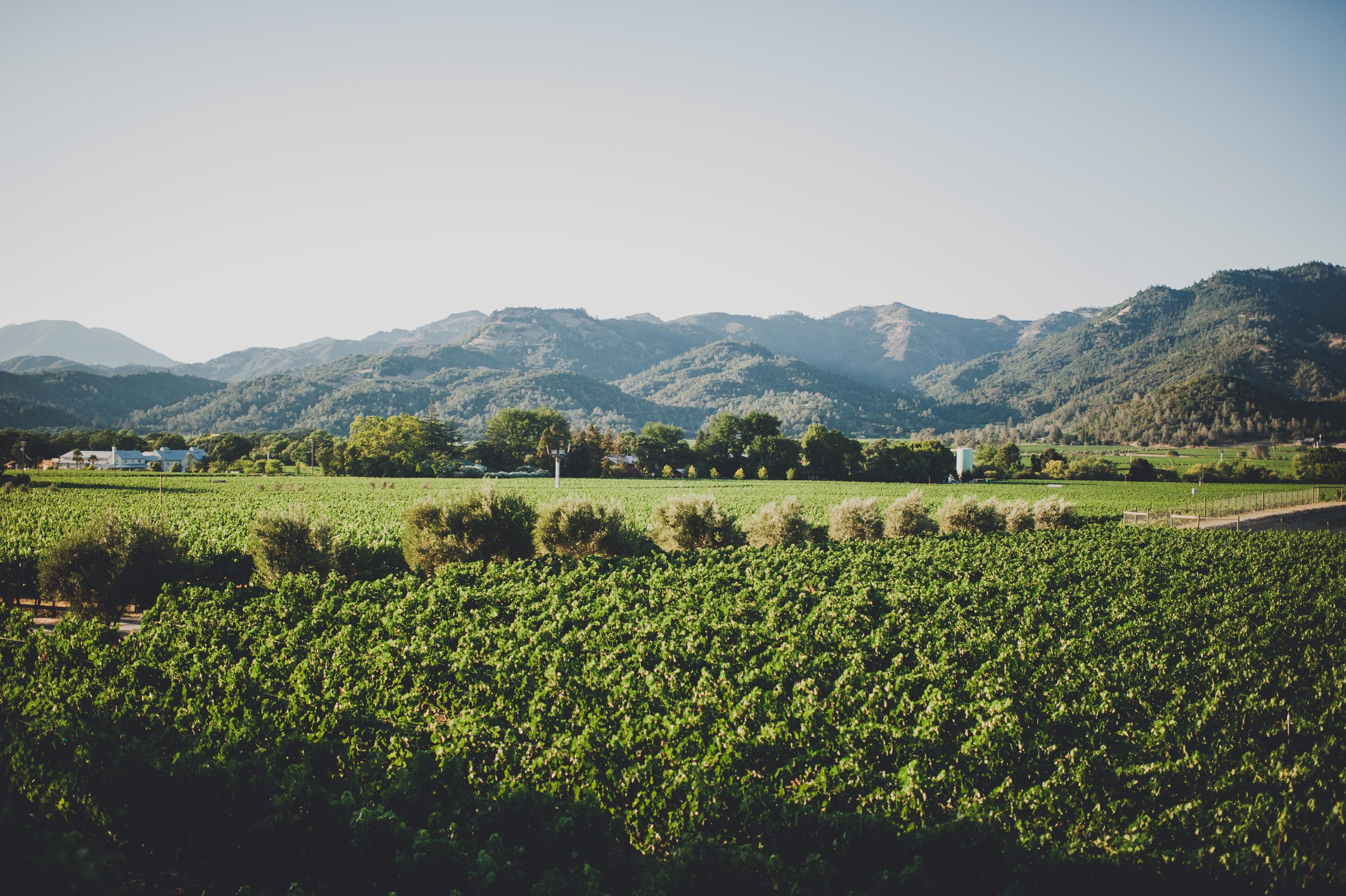 Madrigal Vineyards-239_1.jpg
