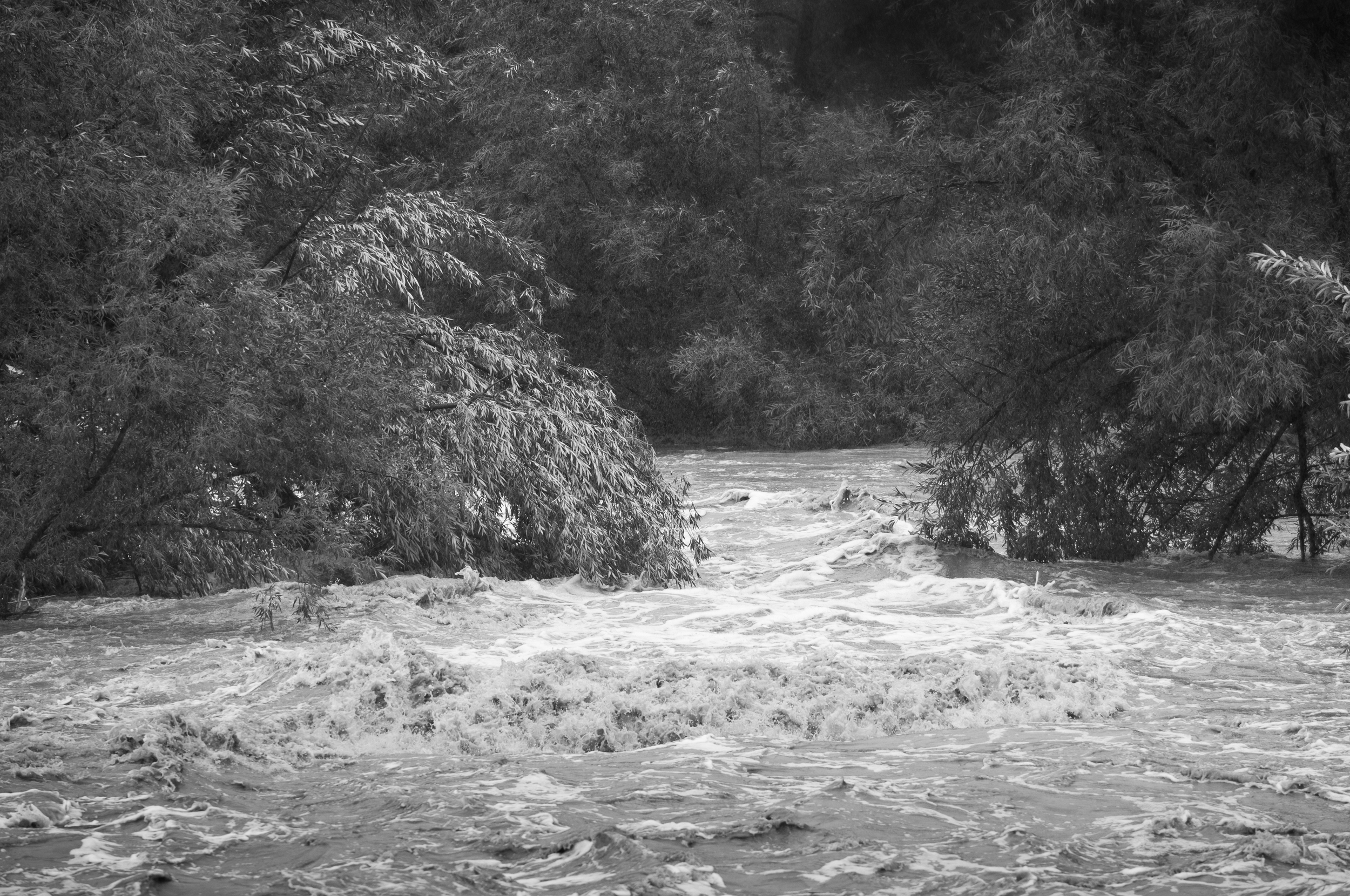 Boulder Creek flows below 75th at a tranquil rate of less than 200cfs on most days. During the flood it was clocked at over 5,000cfs. We figure the local trout are somewhere around Ft. Morgan by now.
