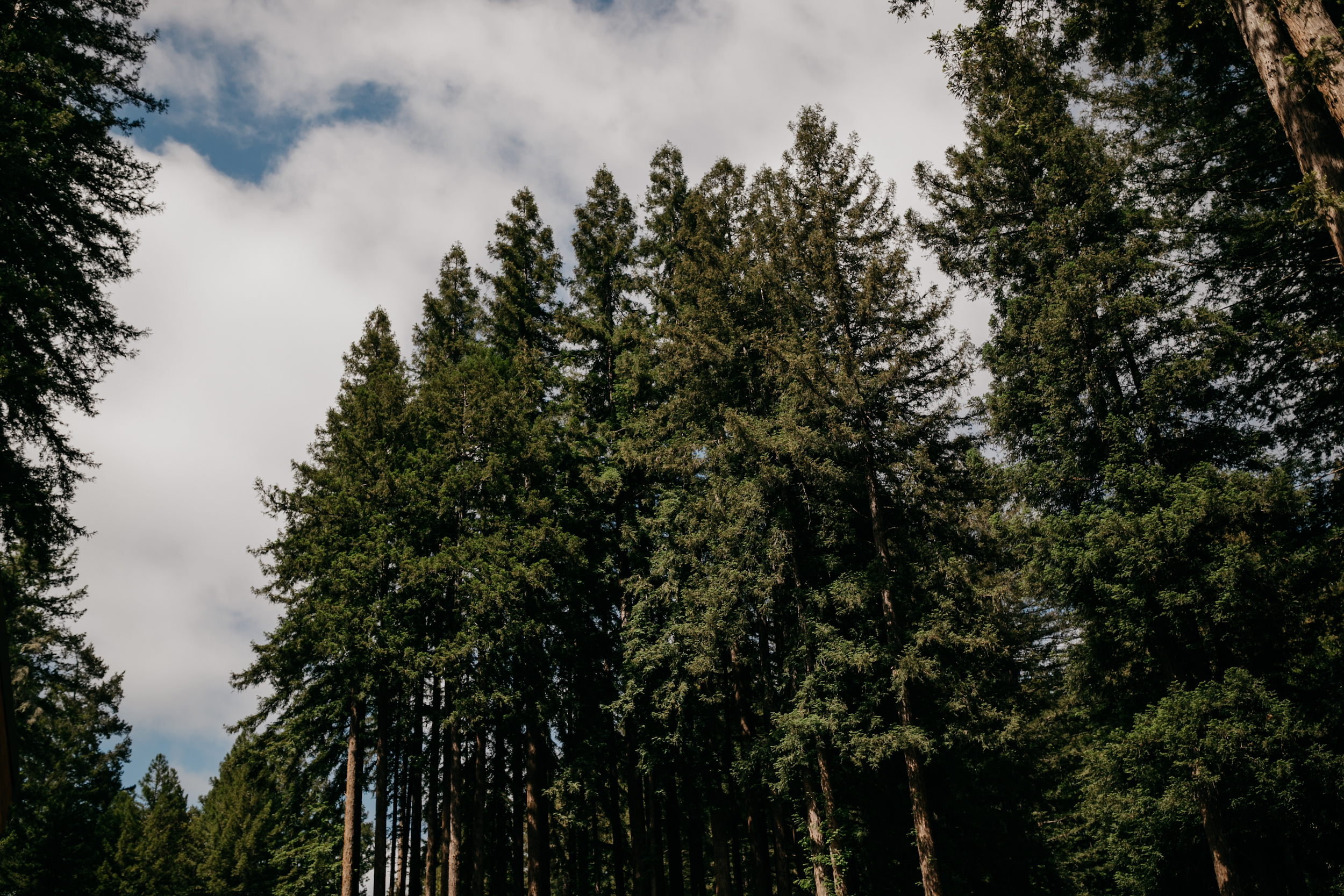 redwoods-wedding-photographer351.jpg