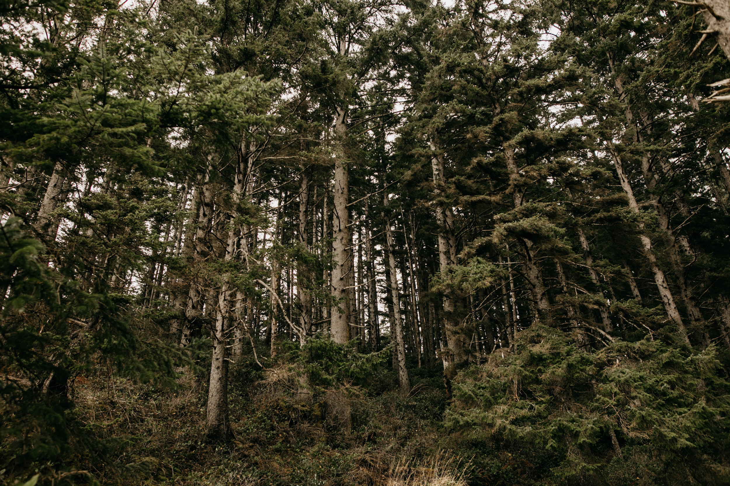 oswald-state-park-oregon-coast-engagement-photographer001.jpg