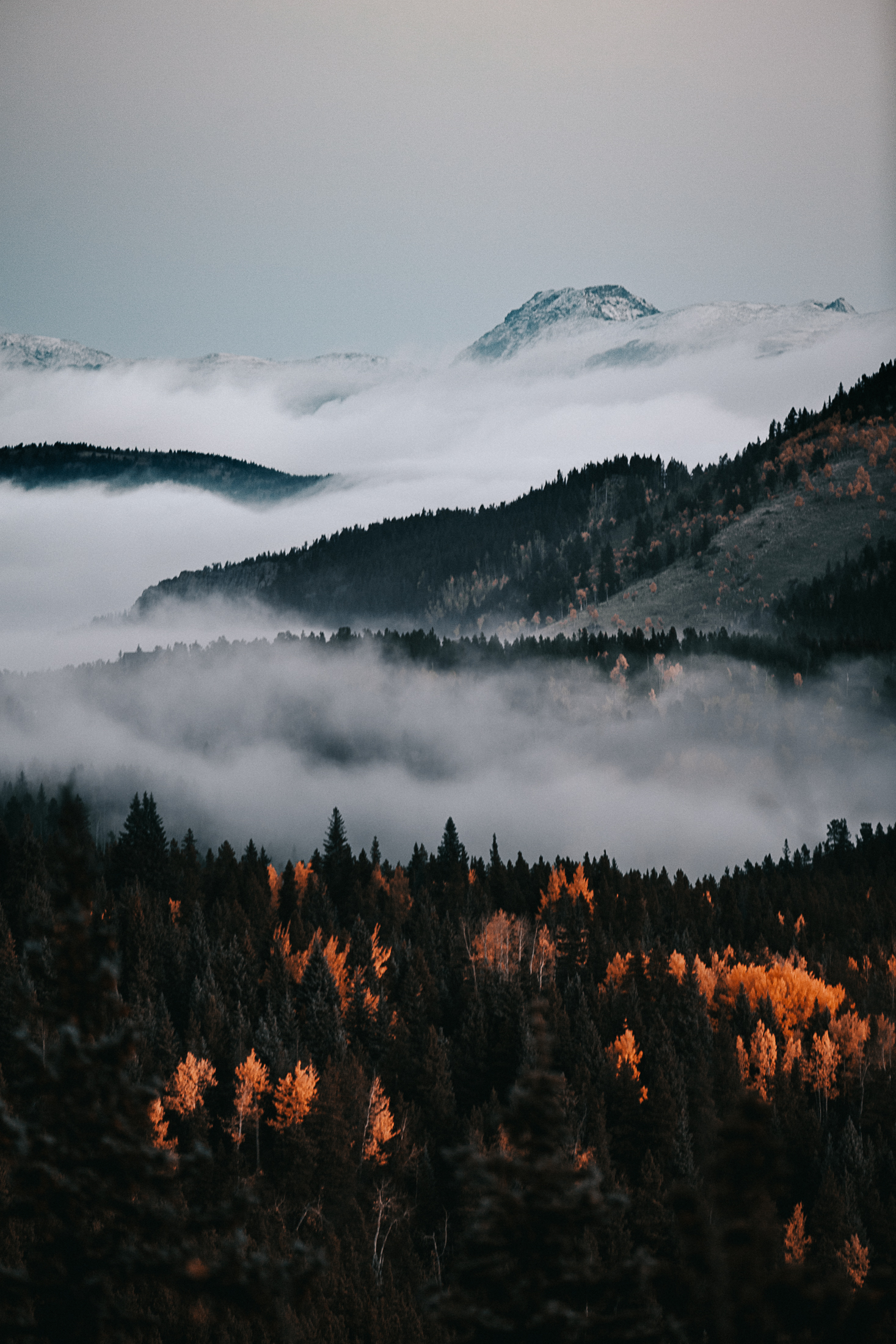 evergreen_FALL_FOG_photo_jimmy_bowron_denver_colorado (1 of 9).jpg