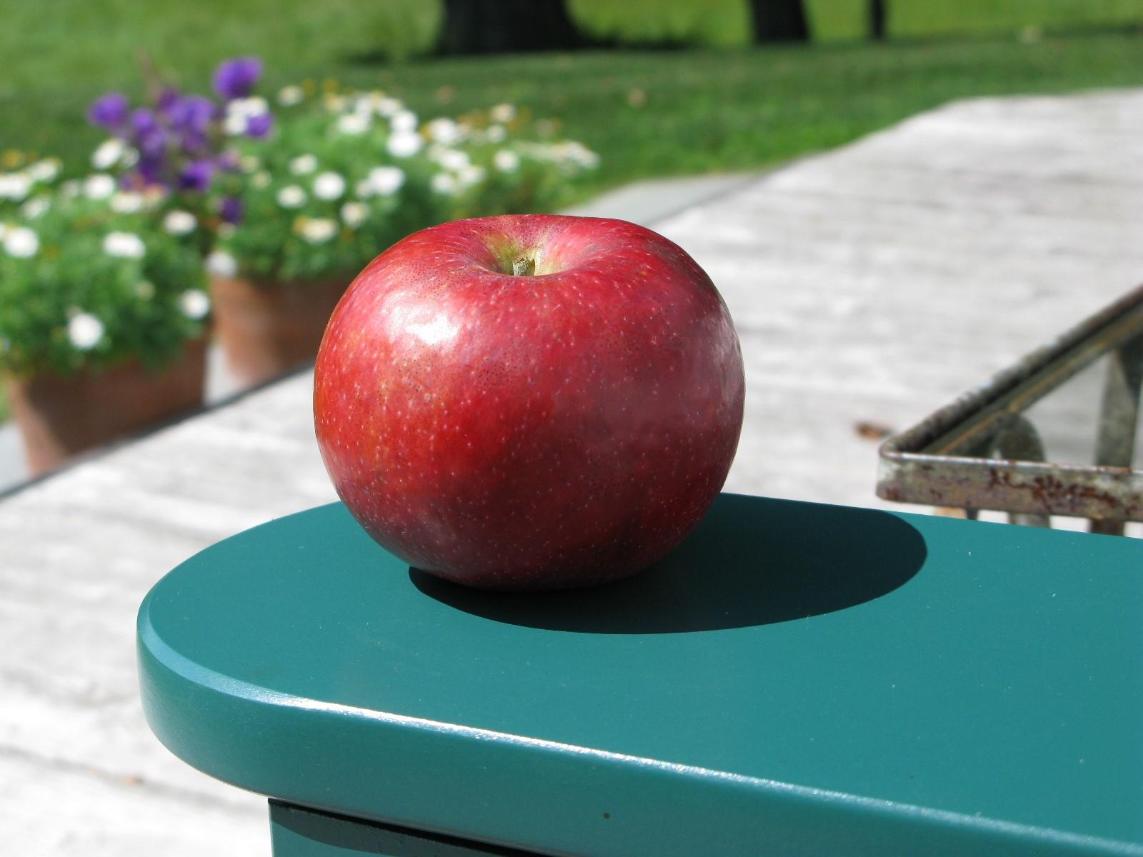 Finley Apple.jpg