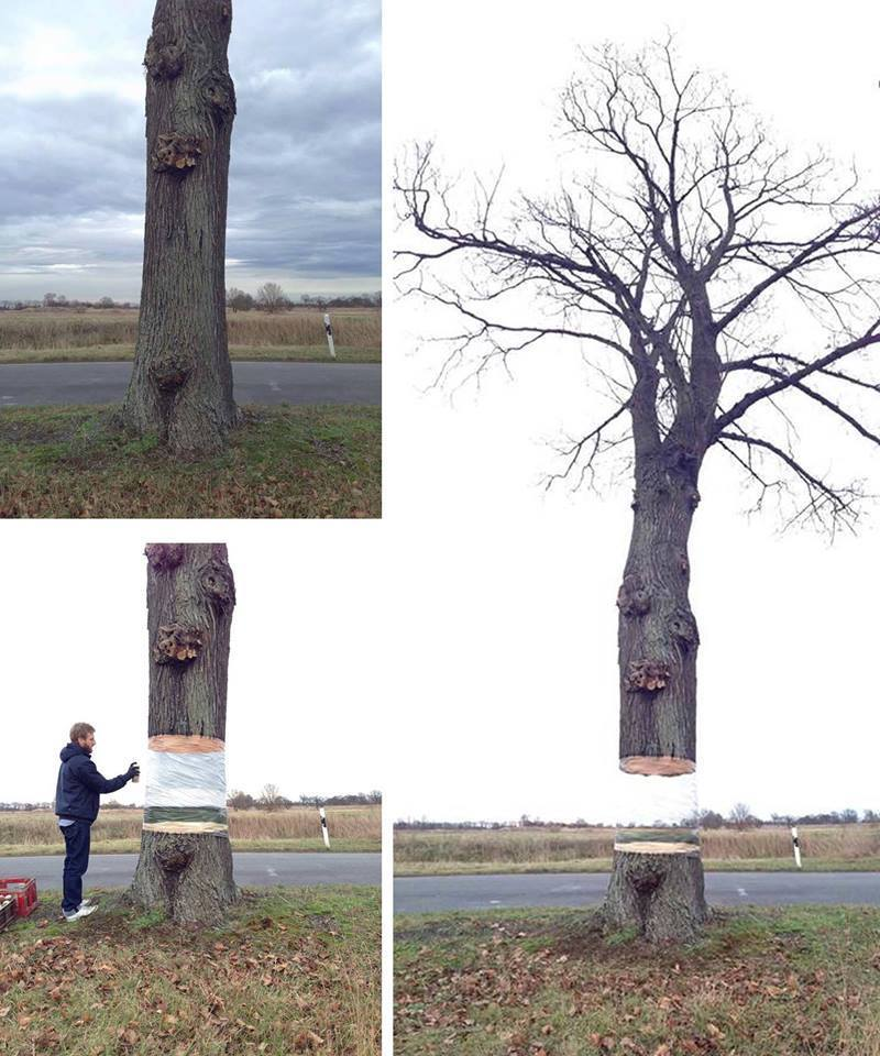 Graphic designer Daniel Siering and art director Mario Schuster, took a normal tree in Potsdaam, Germany and spray painted it in such a way that it looks like it defies gravity. Images taken from http://www.artsnphotography.com/133/artist-duo-spray-paint-a-tree-to-visualize-defy-gravity/#sthash.sIFHHtJA.dpuf