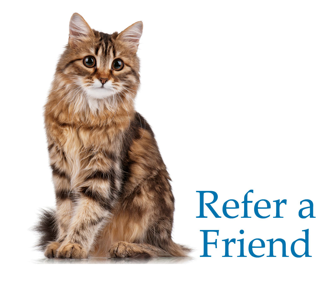Fotolia_38279356-Refer-a-Friend.jpg