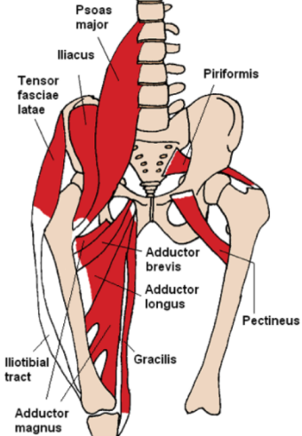 hip_flexors1327944301061.png