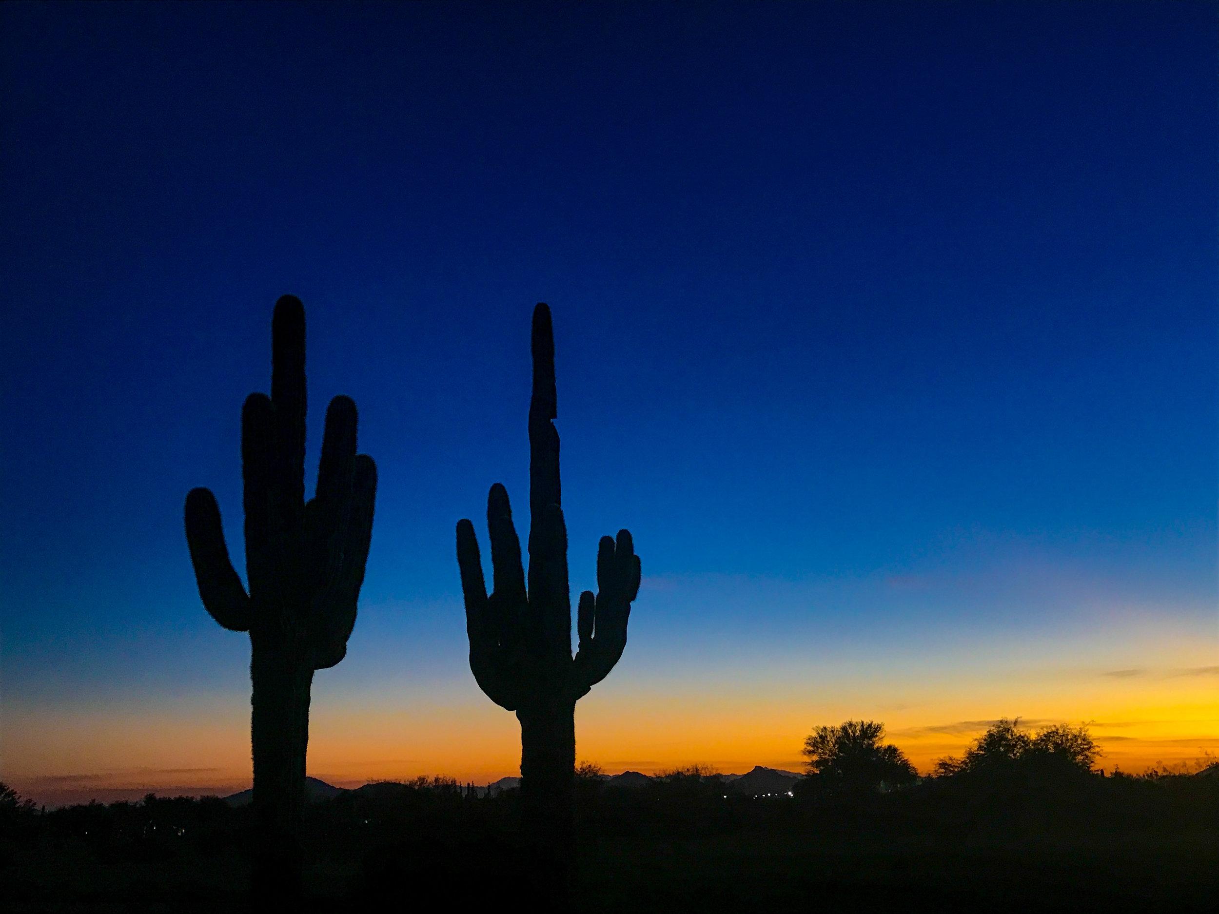 Cactus on the Greyhawk Golf Course in Sedona, AZ