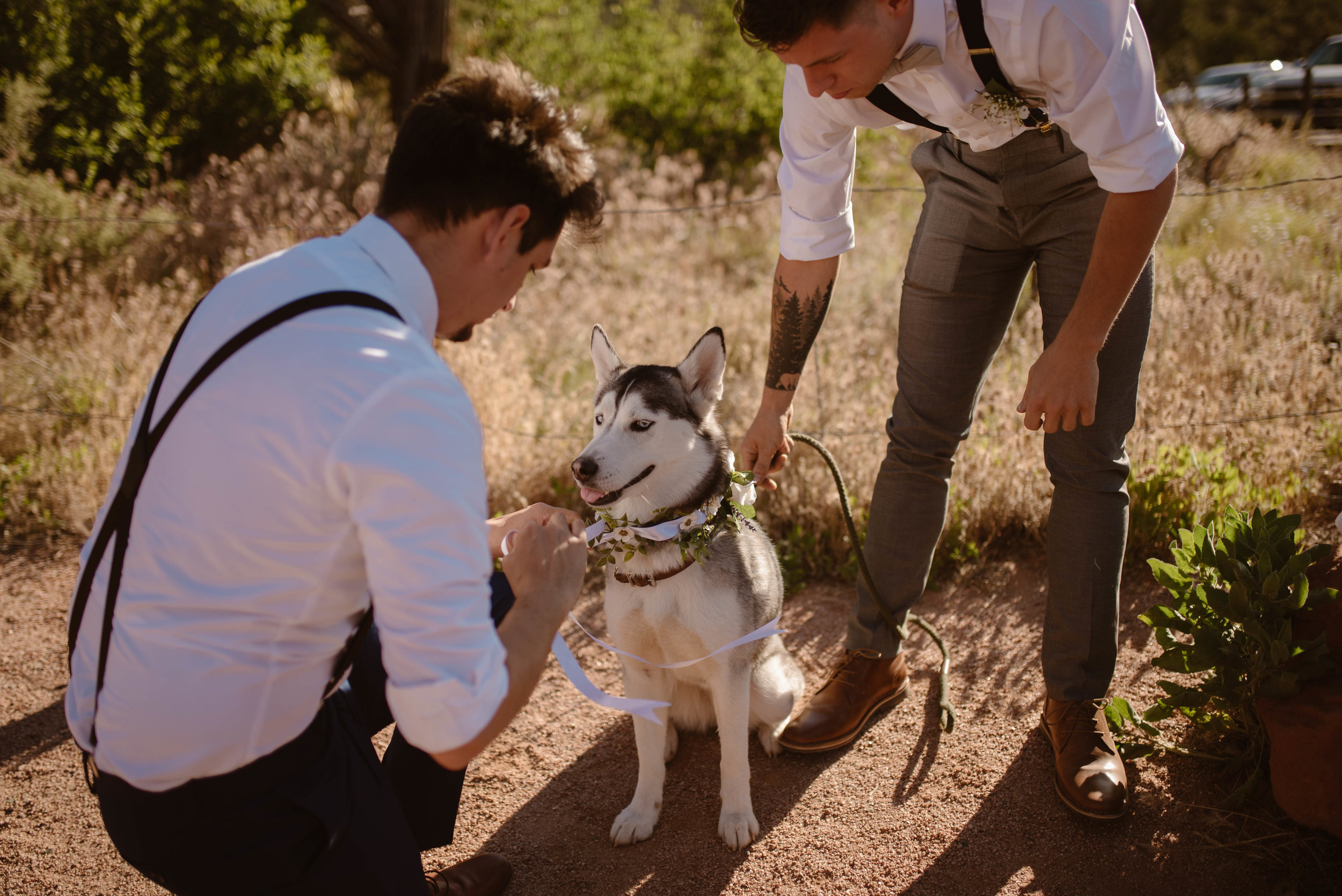 elopement-with-dogs