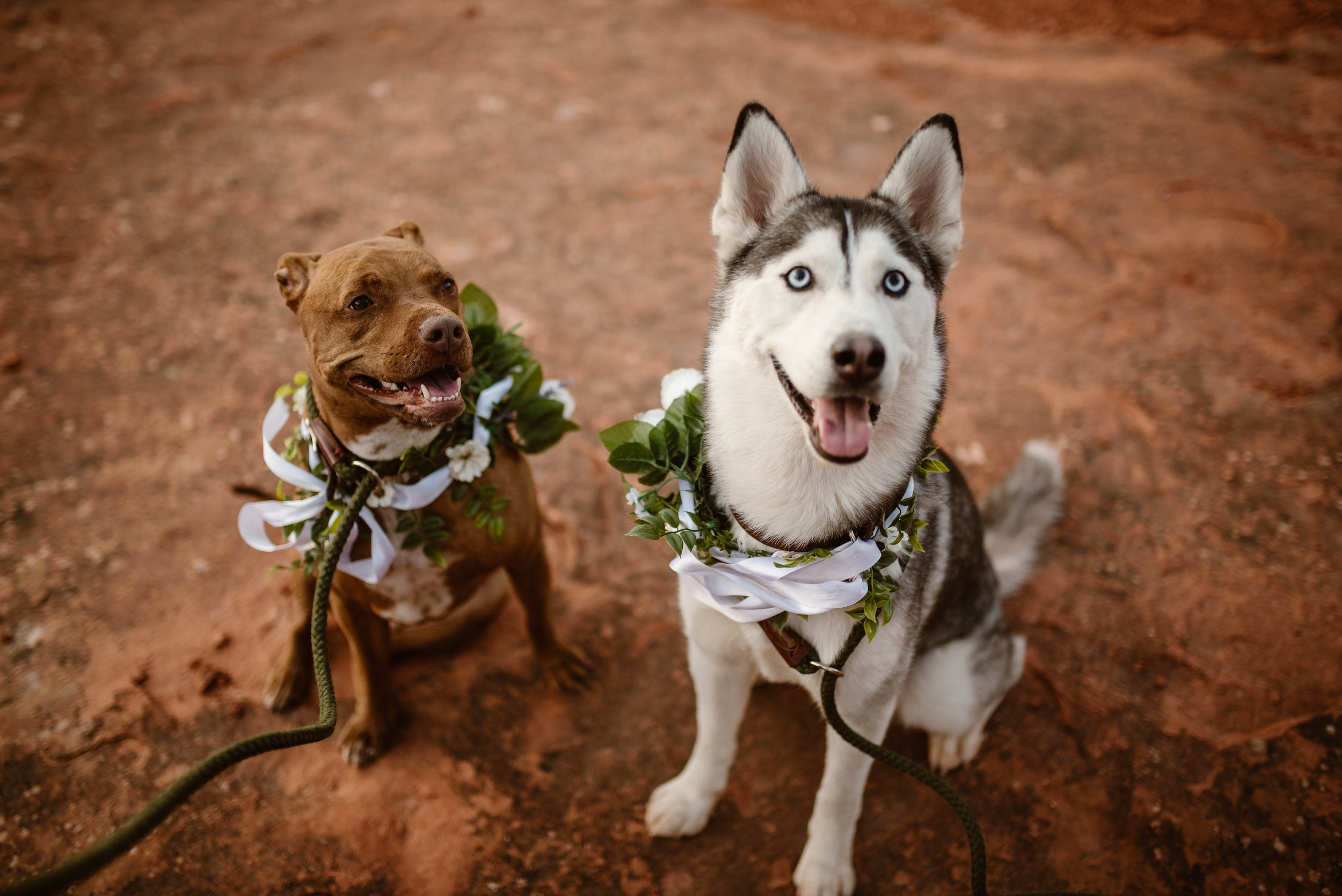 dogs-at-elopements