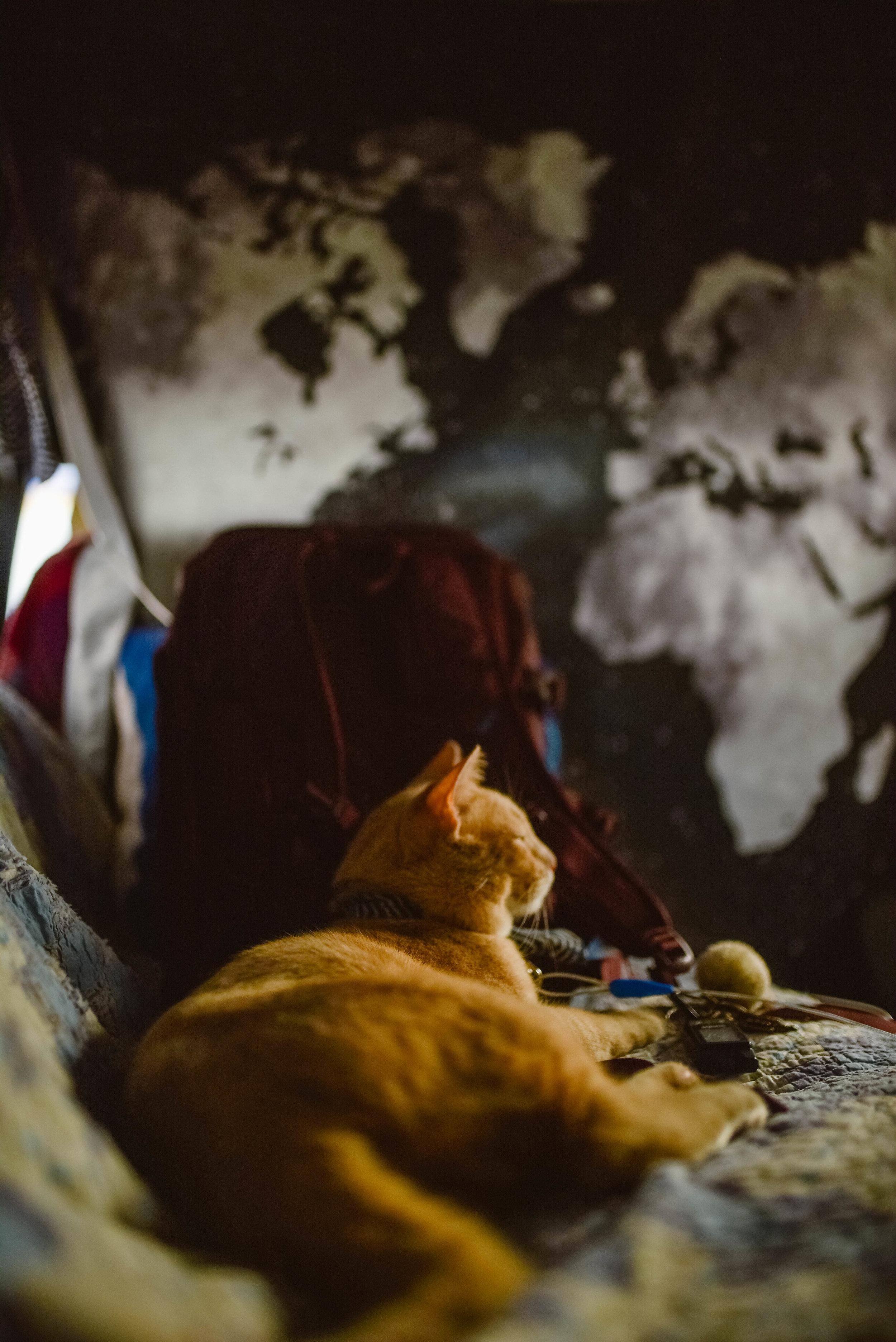 van-life-cat