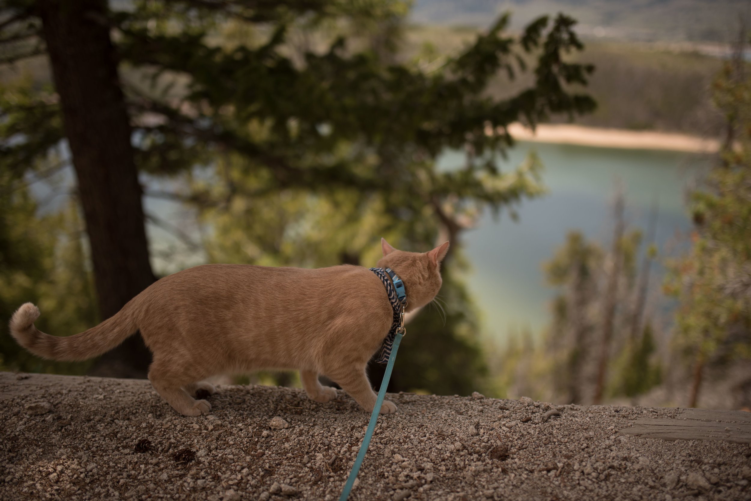 hiking-with-cats