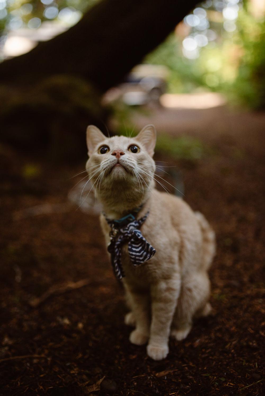 van-life-with-a-cat
