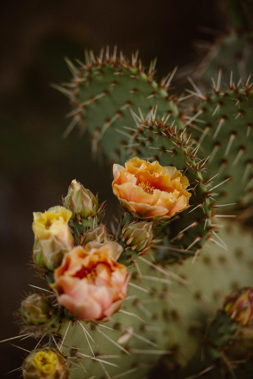 arizona-small-wedding-photographer