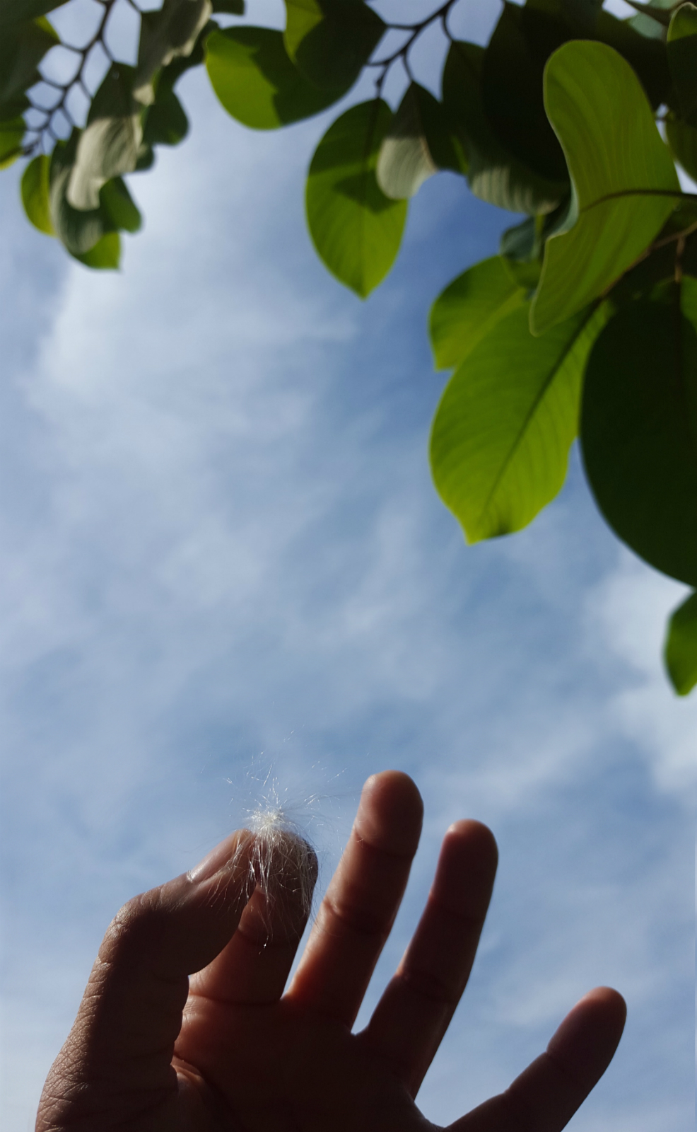 making a wish under grandmother's soursop tree