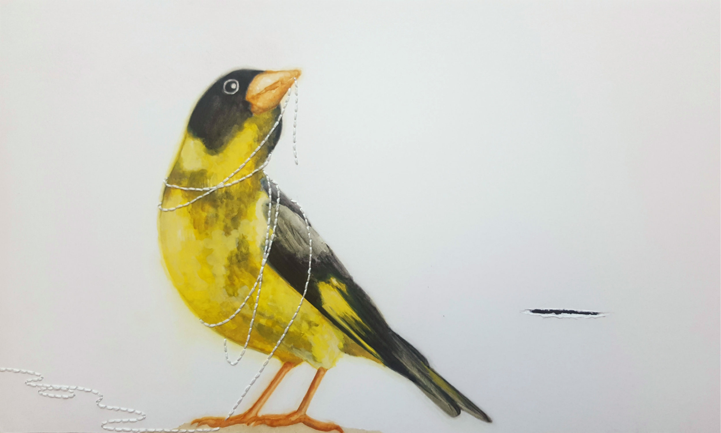Con Chim Đâu (Where is the bird)  , 2018. Detail of Vietnamese greenfinch.