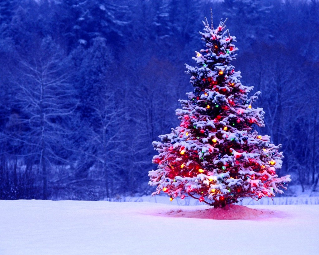 THE ORIGIN OF THE CHRISTMAS TREE.