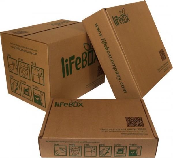 lifebox.jpg