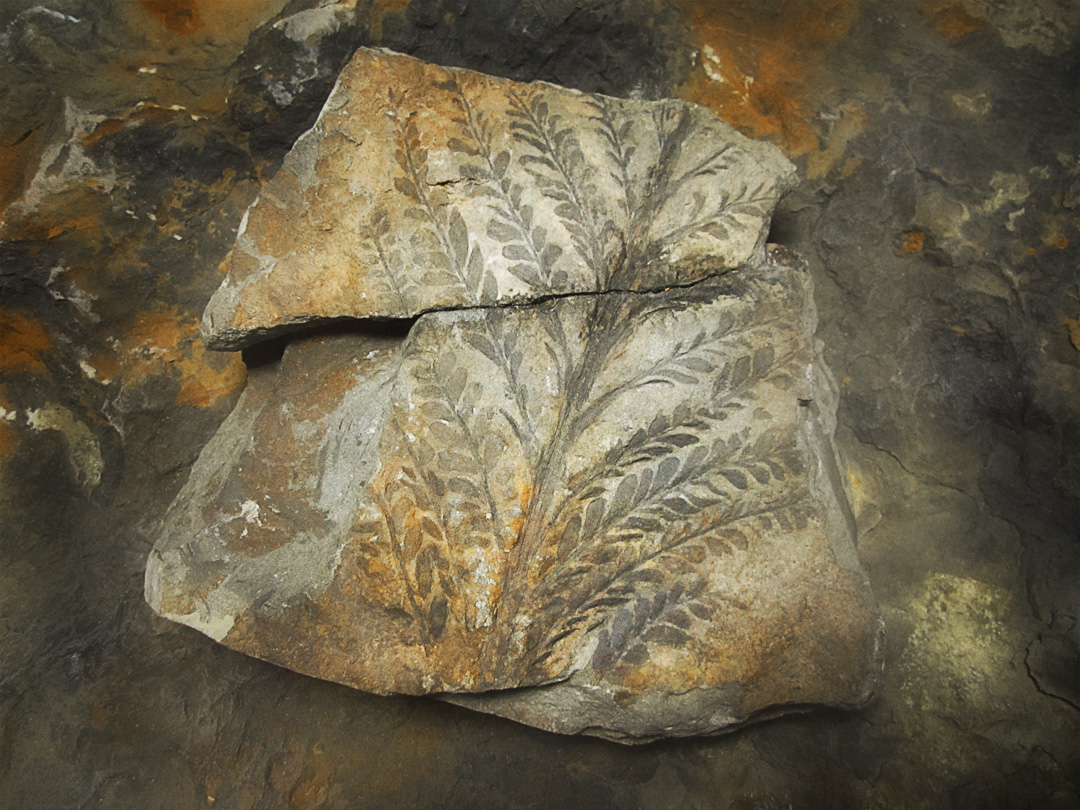 THE OLDEST FOSSIL FOREST