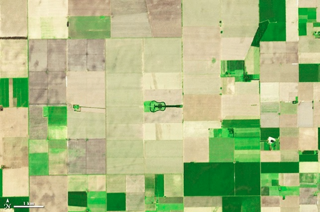 GUITAR-SHAPED FOREST VISIBLE FROM SPACE