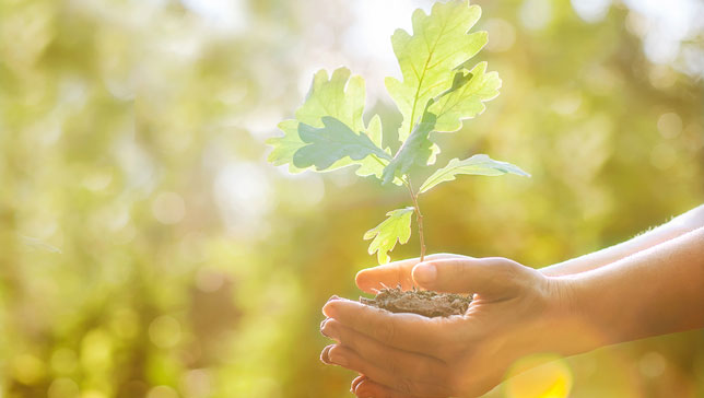 CHOOSING THE RIGHT TREE FOR YOUR YARD