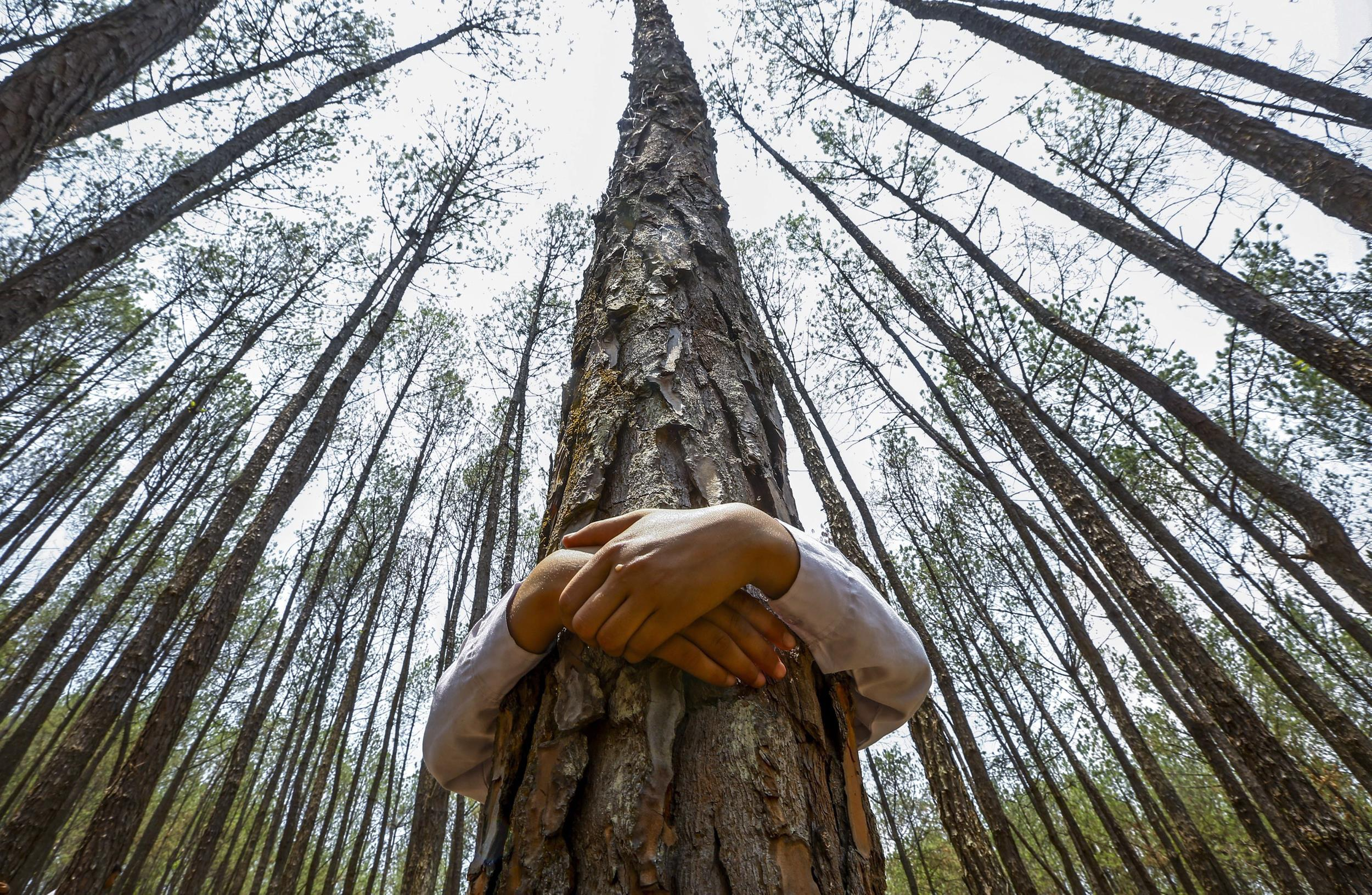 NEPALESE BREAK TREE-HUGGING RECORD