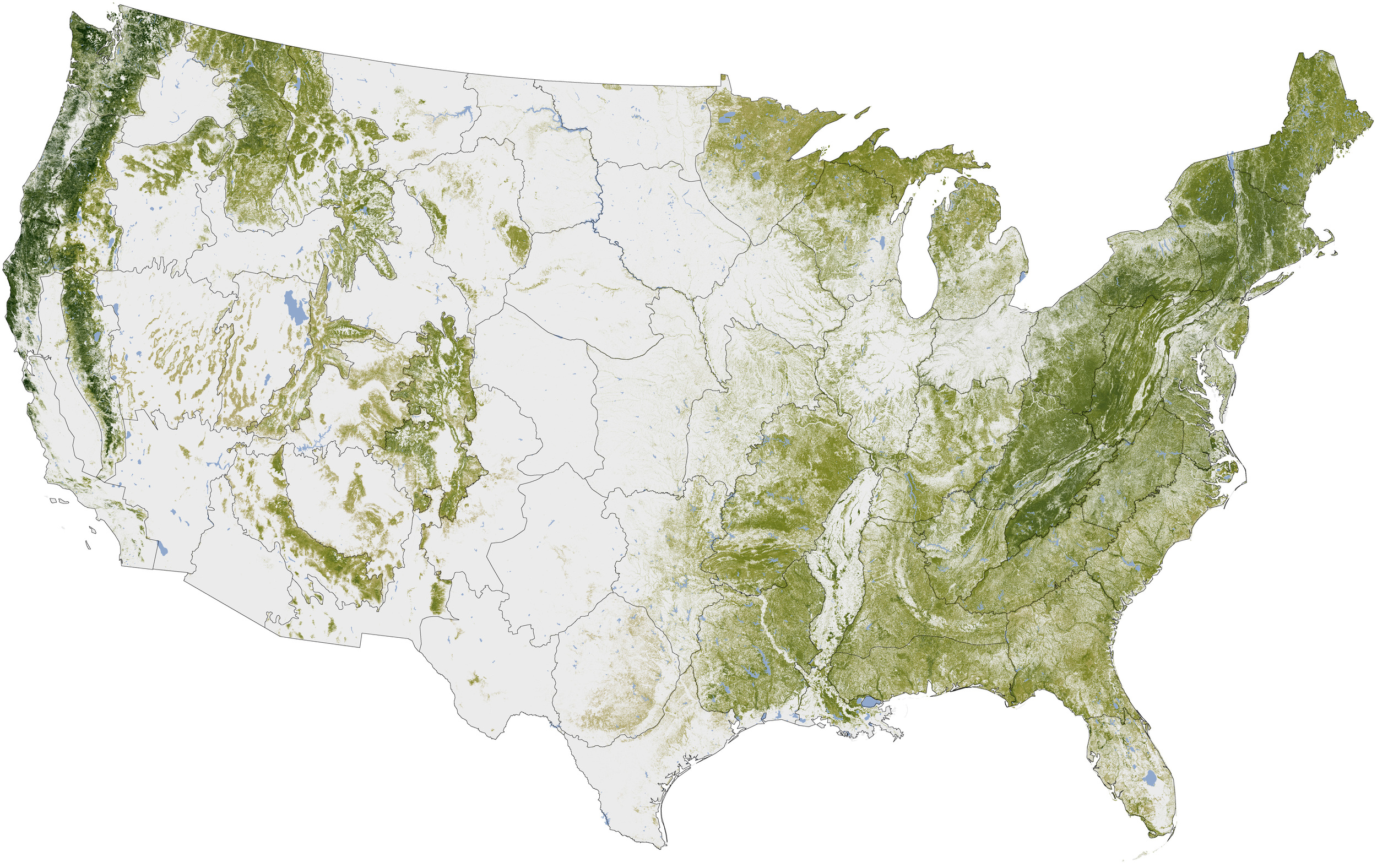 AMAZING MAP SHOWS EVERY TREE IN THE USA (map)